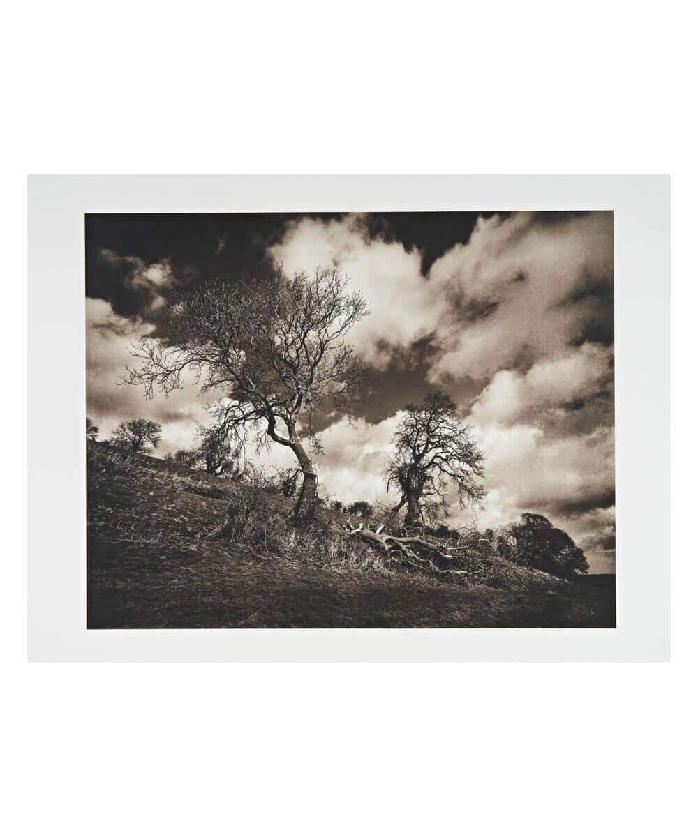 Broken Tree, near Bruton