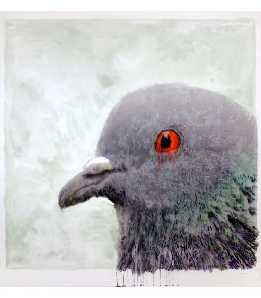 Portraits (Pigeon)