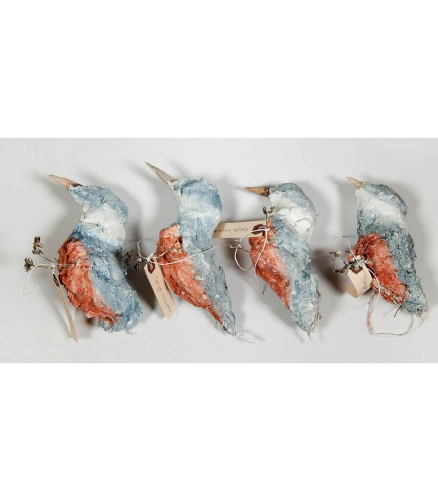 Specimens<br>(Ringed Kingfisher)
