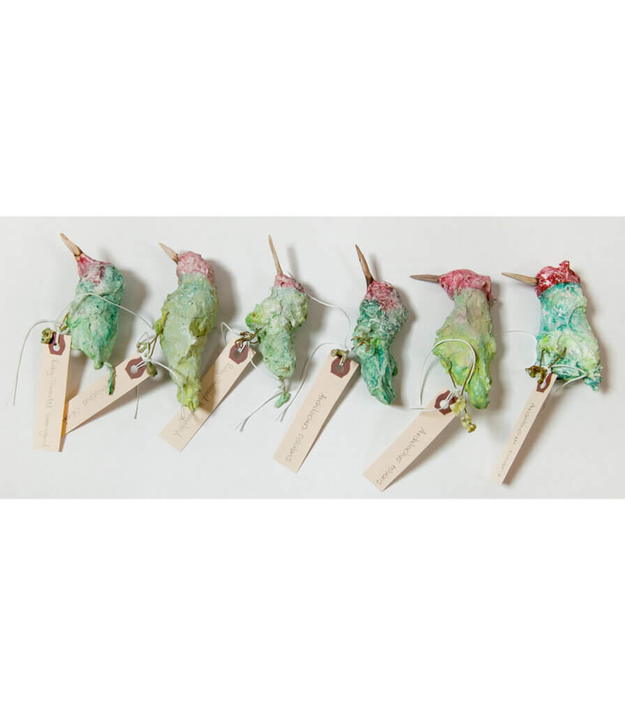 Specimens<br>(Ruby Throated Hummingbirds)