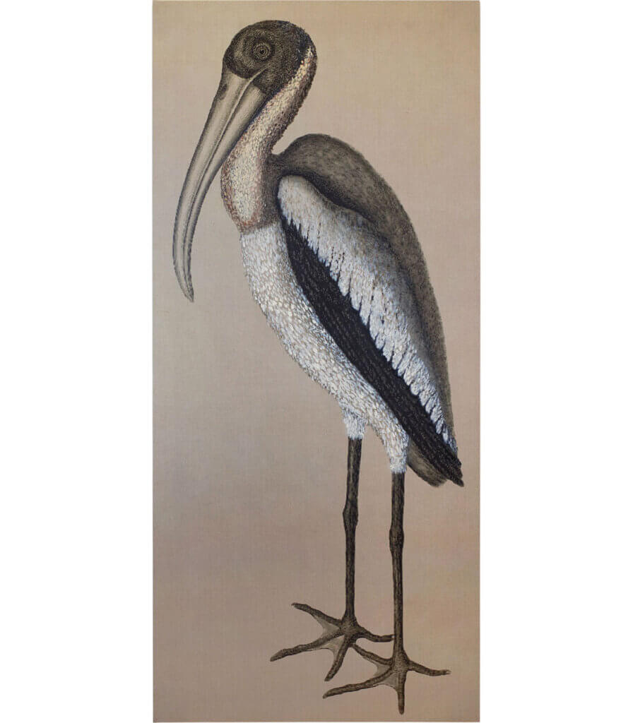 After Catesby<br>(Wood Pelican)