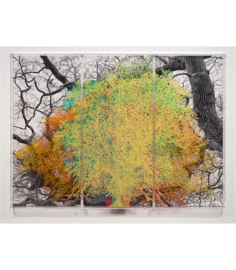 Numbers and Trees: London Series 1, Tree #10, John Carpenter Street